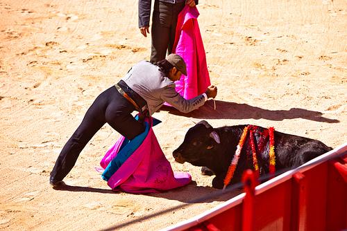 persuasive essay bullfighting